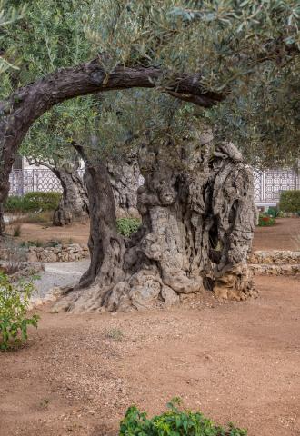 gethsemane, land of the bible