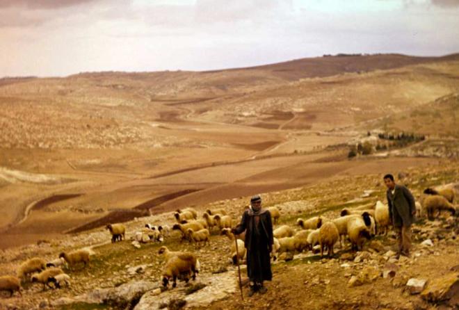 10 12, Shepherds